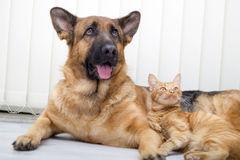 sham and cat